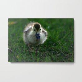 Cute Duckling Walking on a Lawn Metal Print