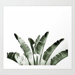 Traveler palm Art Print