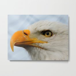 Eagle of America Metal Print