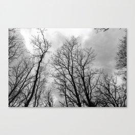 Creepy black and white trees Canvas Print