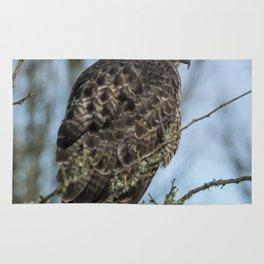 Immature Red-Tailed Hawk Dark Morph Rug