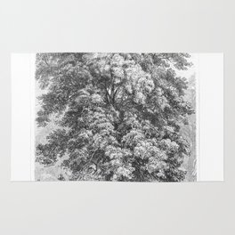 Linden Tree Print from 1800's Encyclopedia Rug