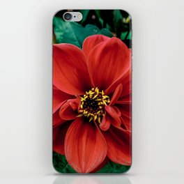 Red Flower. iPhone Skin