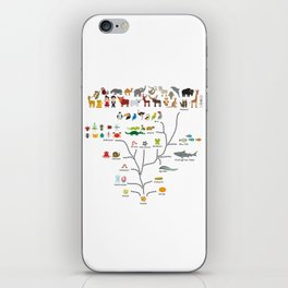 Evolution scale from unicellular organism to mammals. Evolution in biology, scheme evolution iPhone Skin