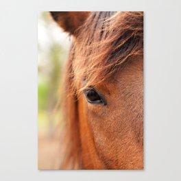 Pensive Horse Canvas Print