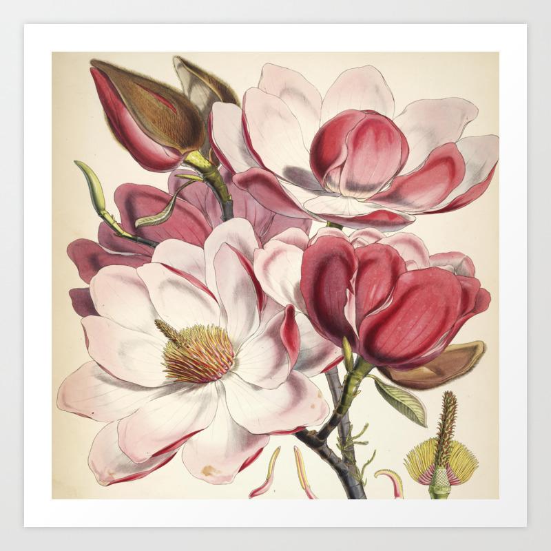 Vintage Floral Sketch Flowers Vintage Painting Art Print By