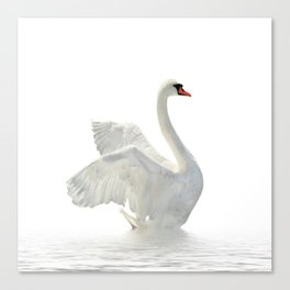 WHITE ON WHITE-BEAUTIFUL SWAN Canvas Print