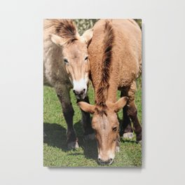 Przewalski Horses Metal Print