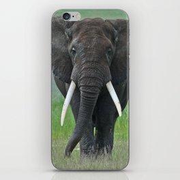 Ngorongoro Ele iPhone Skin