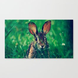 Rabbit Portrait Canvas Print