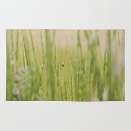 Ladybug in the Grass, Summer Softness with Grain Rug