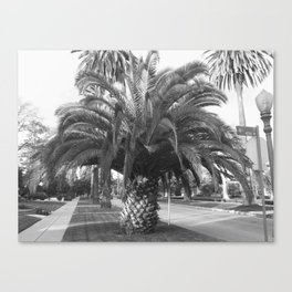 PhatAssTree Be Your Own Tree Canvas Print