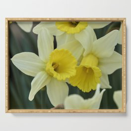 daffodils bloom in spring in the garden Serving Tray