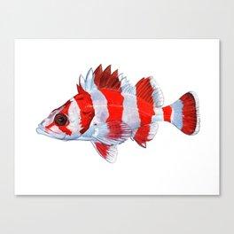 Flag Rockfish - plain Canvas Print