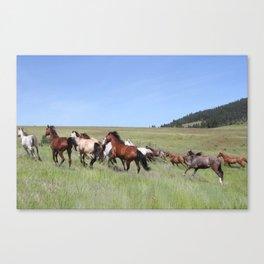 Running Horses Photography Print Canvas Print