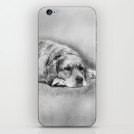 Golden Retriever young and old iPhone Skin