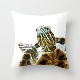 Small red-eared turtle in aquarium Throw Pillow