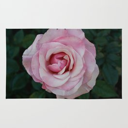 A rose from the mission gardens Rug