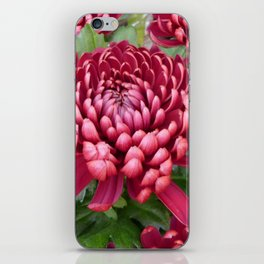 Red chrysanthemum iPhone Skin