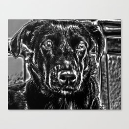 STREETDOG IN ROMANIA Canvas Print