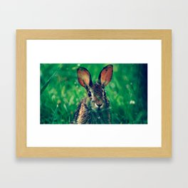 Rabbit Portrait Framed Art Print