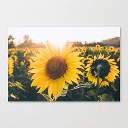 Golden Sun, III Canvas Print