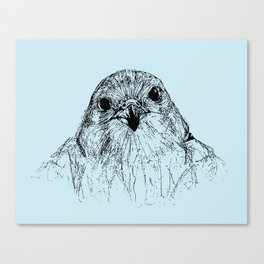 Saker Falcon  Canvas Print