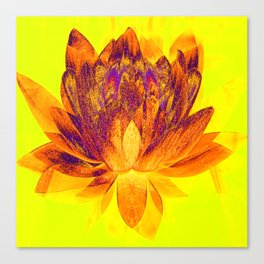 Early morning Lotus.... Canvas Print