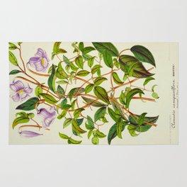 Clematis Campaniflora Vintage Botanical Floral Flower Plant Scientific Illustration Rug