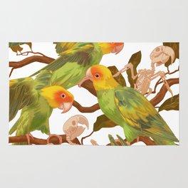 The extinction of the Carolina Parakeet. Rug
