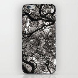 Magnolia Trees in Blossom 02 iPhone Skin