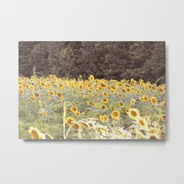 Sunflower Fields Gregg Farm Metal Print