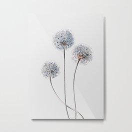 Dandelion 2 Metal Print