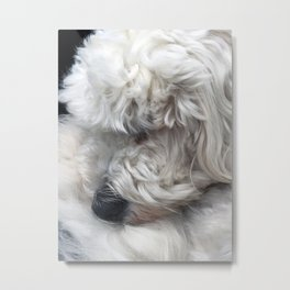 Charlie the Golden Doodle Curled Up In A Ball Metal Print