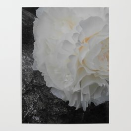 Crystal Peony by Teresa Thompson Poster