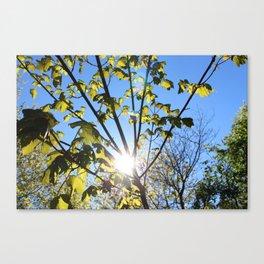 Sun Dance Canvas Print