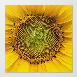 Sunshine sunflower Canvas Print