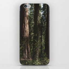 Sunlit California Redwood Forests iPhone Skin