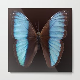 Butterfly exotic Metal Print