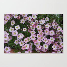 Pink floral spring joy Canvas Print