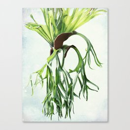 Staghorn Canvas Print