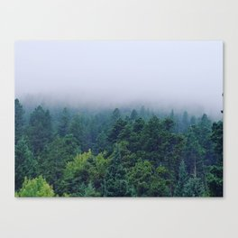 Fog over the pines Canvas Print