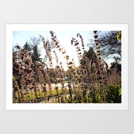 Flowers in Frankenmuth Art Print
