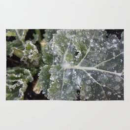The First Frost Rug