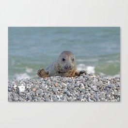 Gray seal - Kegelrobbe Canvas Print