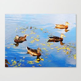 Ducks on a Pond Canvas Print
