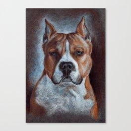 Amstaff Canvas Print