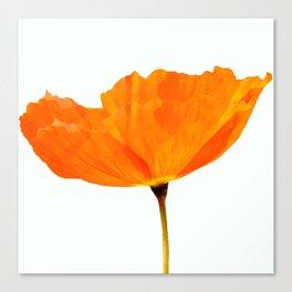 One And Only - Orange Poppy White Background #decor #society6#buyart Canvas Print