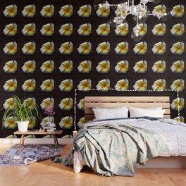 # 339 Wallpaper
