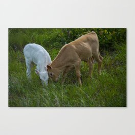 Sibling Rivalry Canvas Print